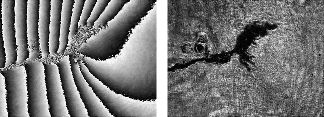 Phasae shifted moire interferometry of crack and transformation zone in Nitinol fatigue specimen.